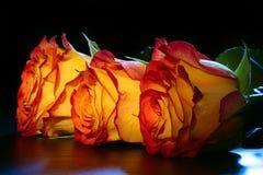 3 roses oranges sur une table. Photos stock