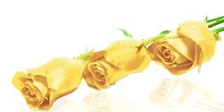 3 rozen Royalty-vrije Stock Afbeelding