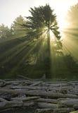 3 słońce Obrazy Stock