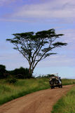 3 safari Zdjęcie Royalty Free