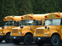 3 school busses. Three busses waiting to take the children back to school Royalty Free Stock Photos