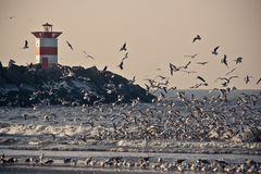 3 seagulls Στοκ φωτογραφίες με δικαίωμα ελεύθερης χρήσης