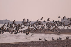 3 seagulls Royaltyfri Foto