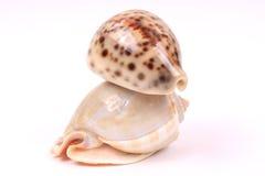 3 seashells photo stock