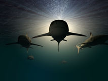 3 sharks. Three 3d sharks swimming underwater Stock Image