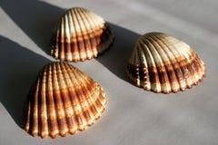 3 shells royalty free stock photos