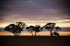 3 silhouetted trees Royaltyfri Fotografi