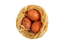 3 small eggs. Eggs in nest isolated on white Royalty Free Stock Photography