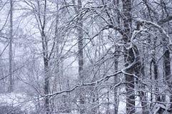 3 snör åt s-vinter Arkivfoton