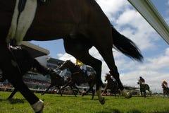 3 som horseracing Royaltyfri Foto
