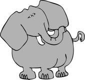 3 słonia Zdjęcia Stock