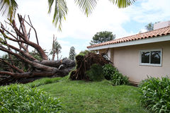 3 spadać fullerton drzewo Zdjęcia Royalty Free