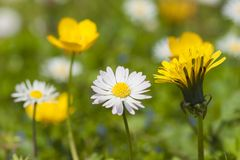3 spring flowers Royalty Free Stock Images