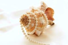 3 stora pärlor för conch Royaltyfri Fotografi
