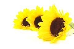 3 Sunflowers Royalty Free Stock Photo