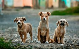 3 Tan Short Coated Puppy on Gray Dirt during Daytime Stock Photo