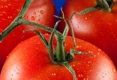 3 tomates Imágenes de archivo libres de regalías
