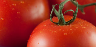 3 tomatoes Royalty Free Stock Photos