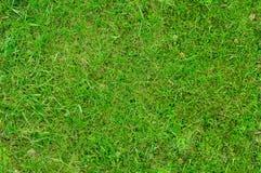 3 trawy. Zdjęcia Stock
