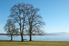 3 trees at the lake Royalty Free Stock Images