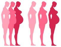 3 trimestres de grossesse   Photos libres de droits