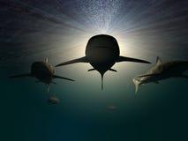 3 tubarões ilustração do vetor