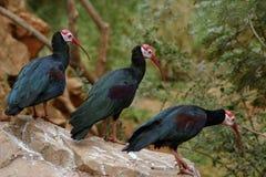 3 Vögel auf einem Felsen Stockfoto