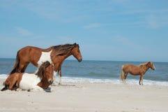 3 wild paarden Royalty-vrije Stock Foto