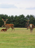 3 wilde mannetjes Royalty-vrije Stock Fotografie
