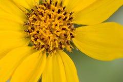 3 wildflowers στοκ εικόνες