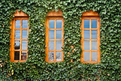 3 Windows Stock Images