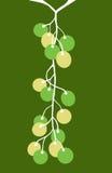 3 winorośli winogron. Obraz Stock