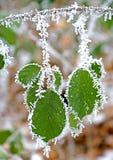 3 wzorów zima Obraz Royalty Free