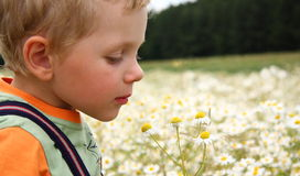 3 years boy smelling daisy Stock Image