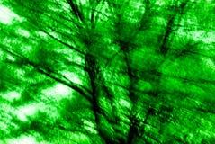 3 zielony abstraktów drzewo. Fotografia Stock