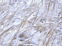 3 zimy. Obraz Stock