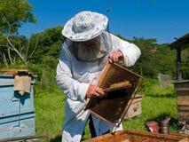 30蜂农 免版税库存照片