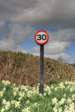30 mph sign in Daffodils Royalty Free Stock Image