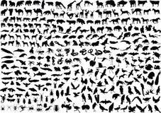 300 животных силуэтов Стоковые Изображения RF