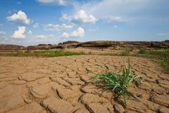 3000 bok沙漠泰国 免版税图库摄影