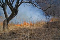 31火森林 免版税库存图片