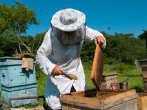 31蜂农 库存照片