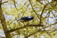 32鸟 免版税库存照片