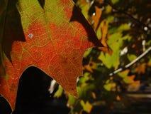 纹理状的叶子 免版税图库摄影