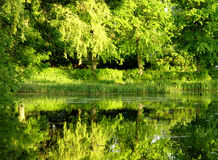 绿色水 库存图片
