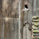 老木头 免版税库存图片
