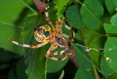33蜘蛛网 库存照片