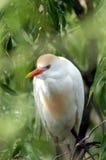 自然的栖所 免版税图库摄影