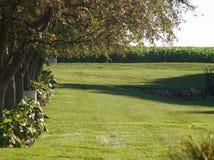 草坪被排行的结构树 免版税库存照片