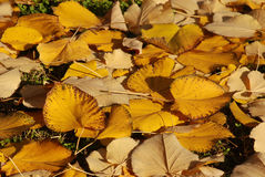 34 листь Стоковые Фото
